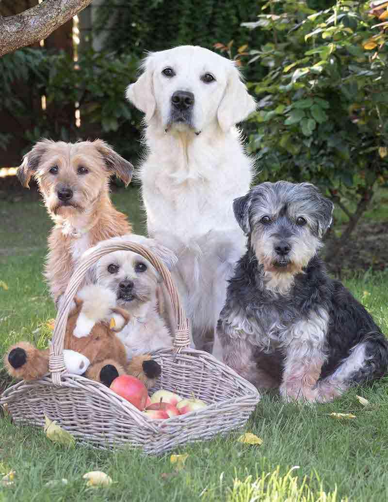 Boddenberg Hunde-Team Niko, Polly, Nina, Flocki
